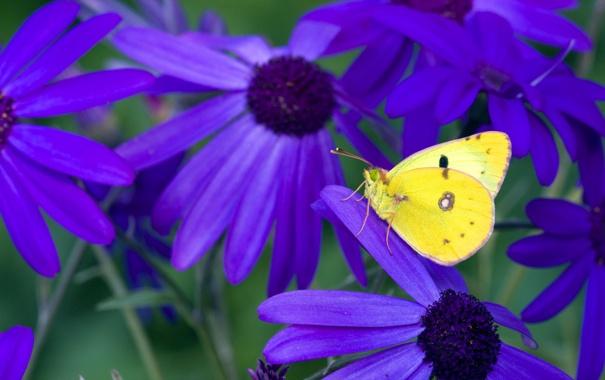 Фото обои цветы, бабочка, контраст