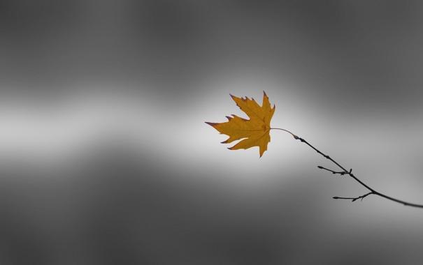Фото обои one, Last, falling