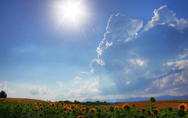 Фото обои поле, небо, солнце, облака, лучи, свет, подсолнухи