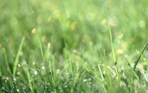 Фото обои лето, трава, капли, макро, роса, блеск, размытие