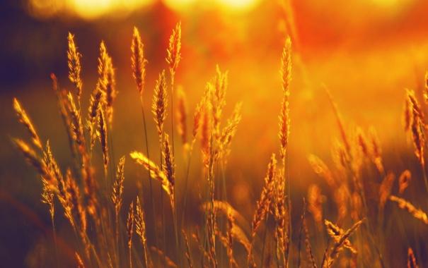 Фото обои поле, солнце, свет, ярко, 2560х1600