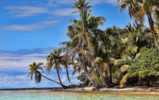 Фото обои песок, море, зелень, пляж, пальмы, океан, остров