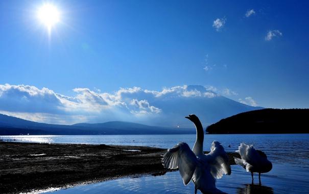 Фото обои небо, вода, солнце, пейзаж, природа, красота, лебеди