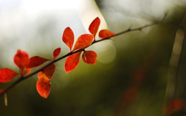 Фото обои осень, макро, фото, фон, обои, растения, ветка