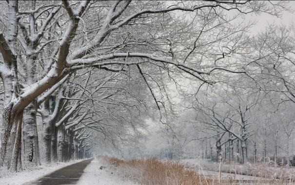 Фото обои зима, дорога, снег