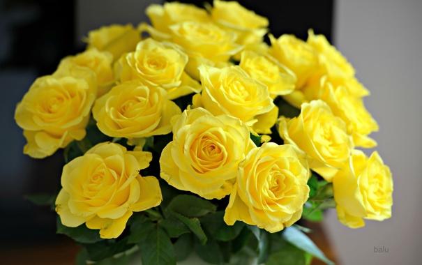 Фото обои розы, букет, желтые