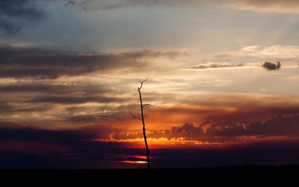 Фото обои небо, пейзаж, ночь, дерево