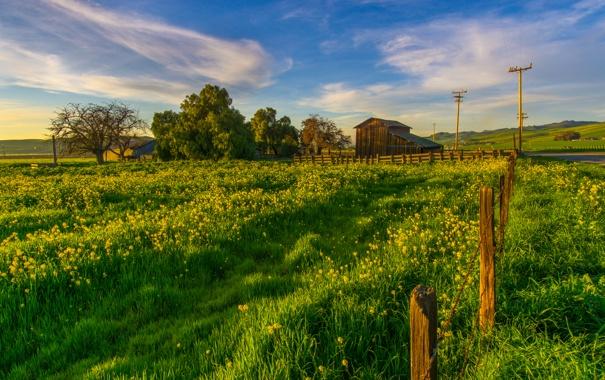 Фото обои зелень, трава, деревья, столбы, забор, поля, сарай