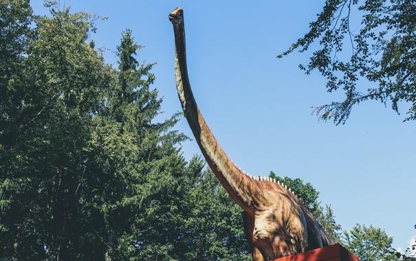 Фото обои динозавр, шея, dinosaur, диплодок