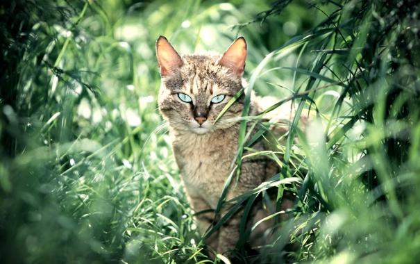 Фото обои лето, трава, кошки