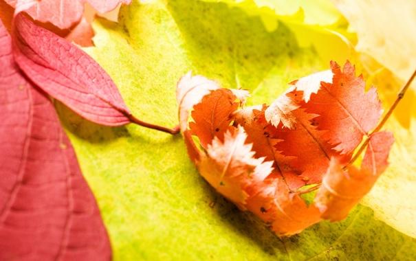 Фото обои листья, макро, фото, фон, картинки