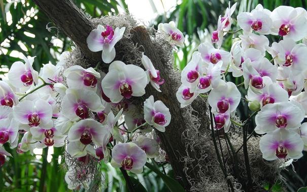 Фото обои орхидеи, экзотика, соцветия
