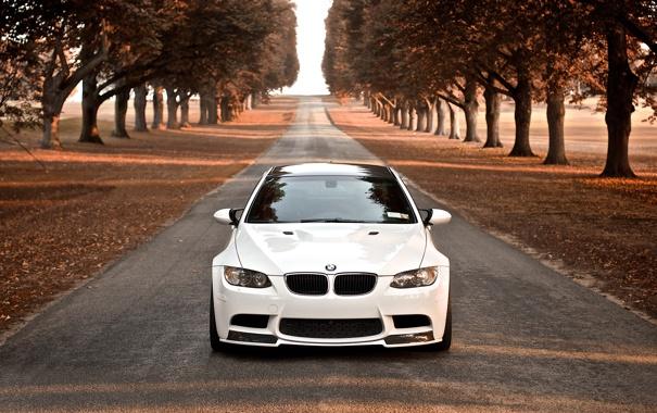 Фото обои дорога, осень, деревья, BMW, белая