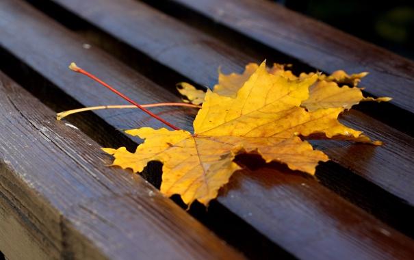 Фото обои осень, листья, лавочка
