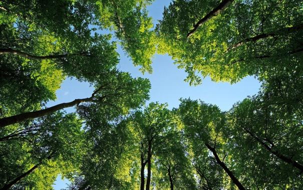 Фото обои небо, листья, деревья, природа, фотографии, леса