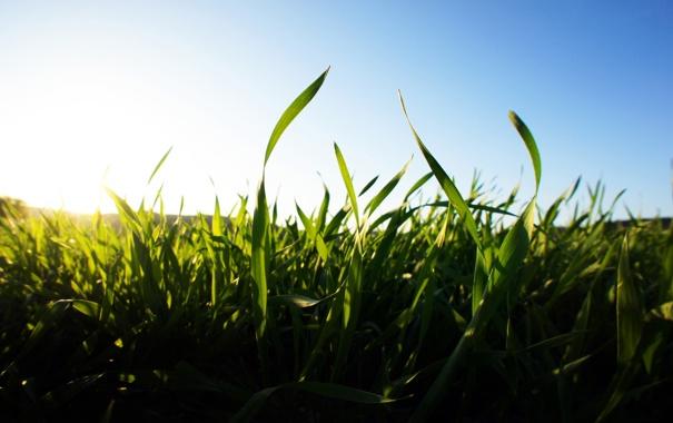 Фото обои лето, небо, трава, солнце, свет, природа, утро