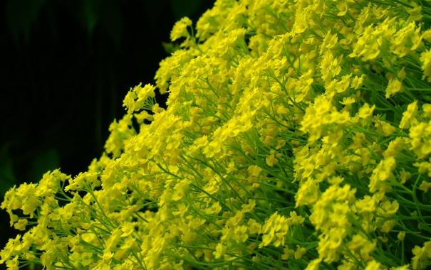 Фото обои макро, цветы, жёлтый, фон, чёрный, стебли, зелёный