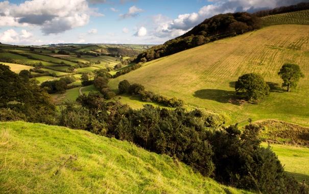 Фото обои трава, деревья, холмы, поля, простор, луга