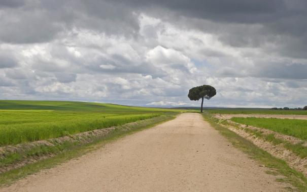 Фото обои дорога, небо, трава, тучи, дерево