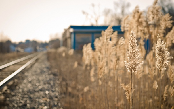 Фото обои трава, свет, железная дорога