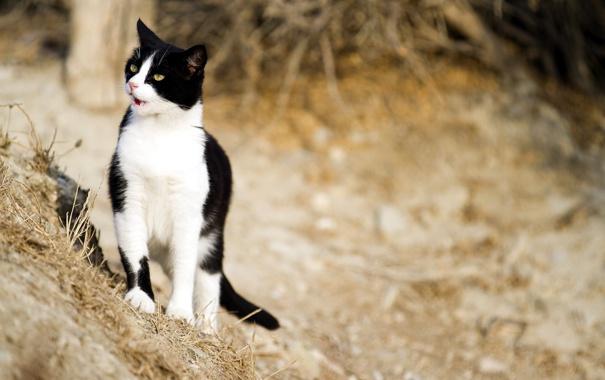 Фото обои кошка, природа, фон