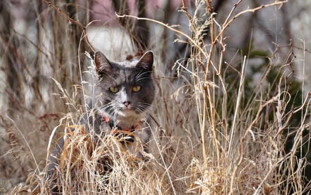 Фото обои кошка, трава, природа