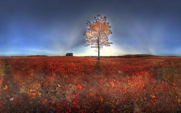 Фото обои поле, свет, пейзаж, природа, дерево