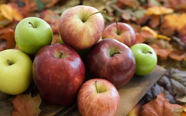 Фото обои осень, яблоки, сад, урожай