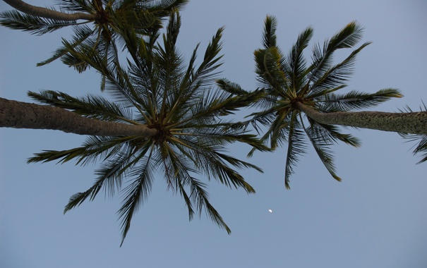 Фото обои небо, тропики, пальмы, луна