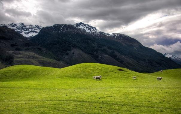 Фото обои животные, горы, птицы, природа, холмы, овцы