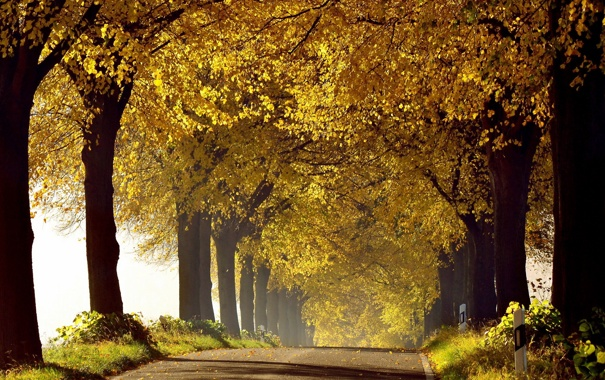 Фото обои дорога, осень, утро