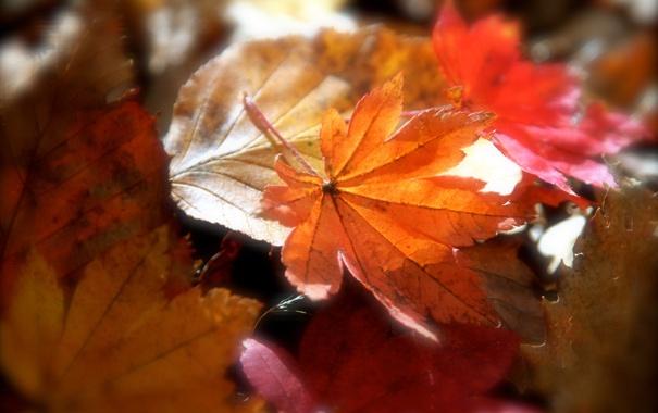 Фото обои листья, опавшие, осенние