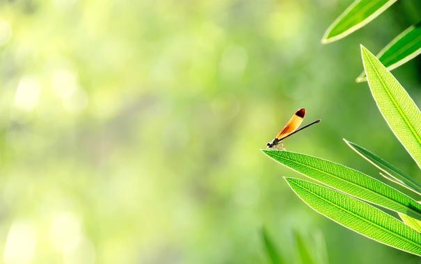 Фото обои зелень, листья, солнце, свет, насекомое
