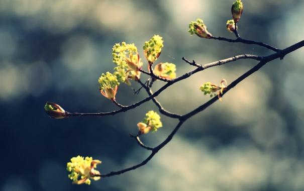 Фото обои картинки, весна, фото, обои, почки, природа, растения