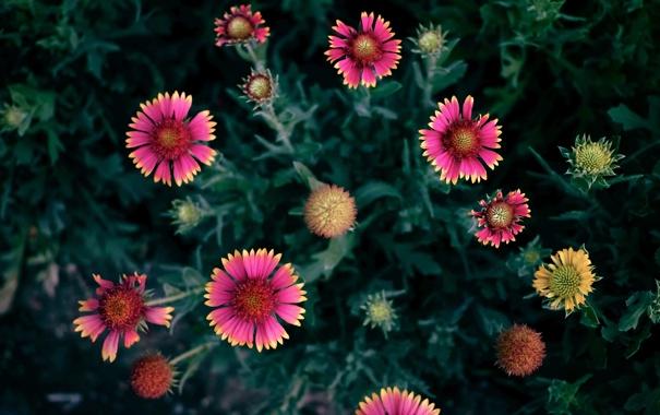 Фото обои Цветок, лепестки, flower