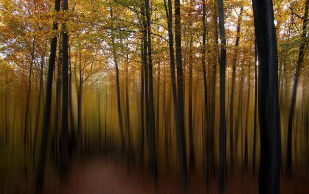 Фото обои лес, пейзаж, стиль