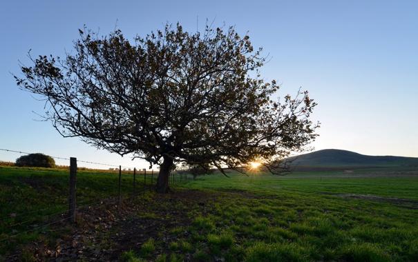 Фото обои поле, забор, дерево