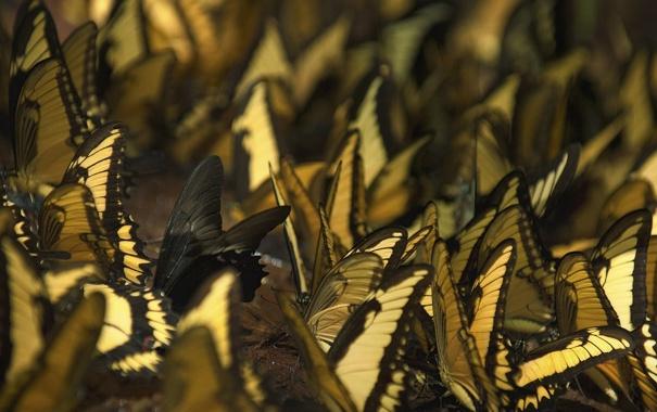 Фото обои бабочки, насекомые, обои, разное