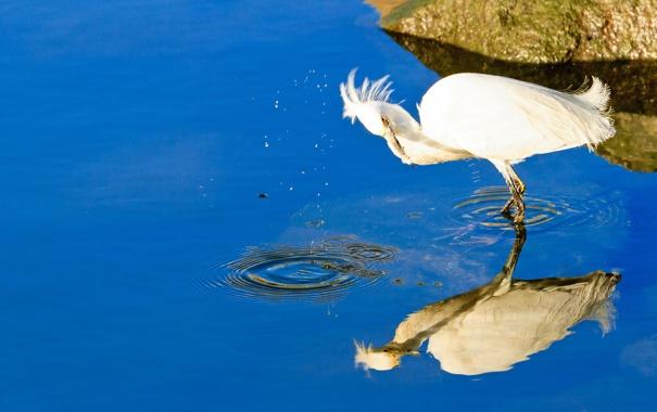 Фото обои вода, природа, птица, камень