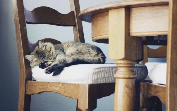 Фото обои кошка, уют, дом, стул