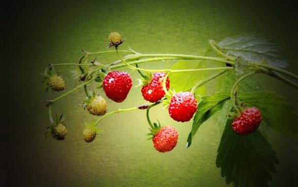 Фото обои свет, полотно, лист, стебель, земляника, клубника, ягода