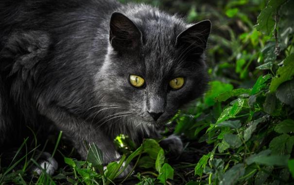 Фото обои кошка, трава, глаза, кот, взгляд, морда