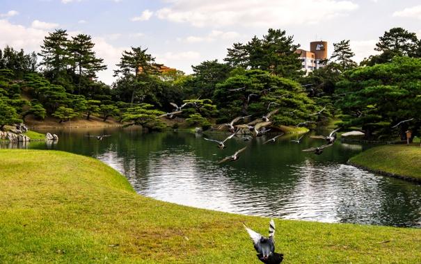 Фото обои зелень, трава, деревья, полет, птицы, пруд, парк