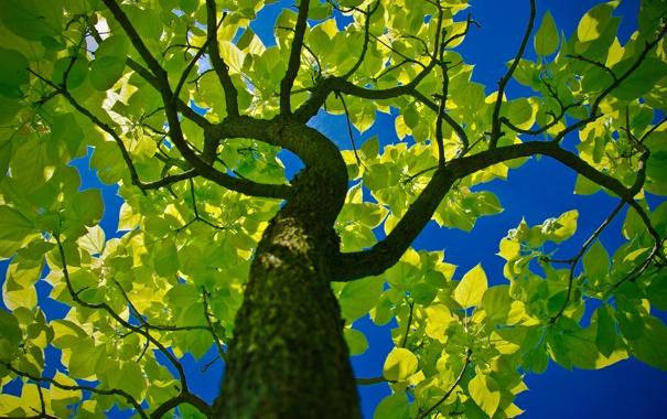 Фото обои зелень, небо, природа, дерево, листва, ствол