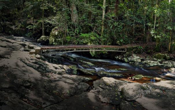 Фото обои лес, мост, река, камни