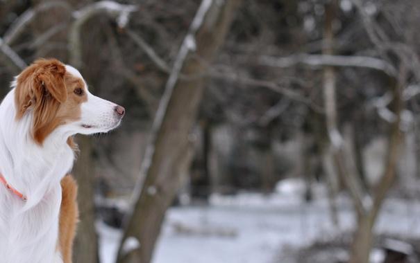 Фото обои друг, собака, профиль