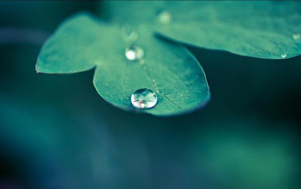 Фото обои макро, природа, зеленый, листок, растение, цвет, капля