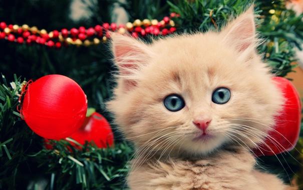 Фото обои котенок, праздник, елка