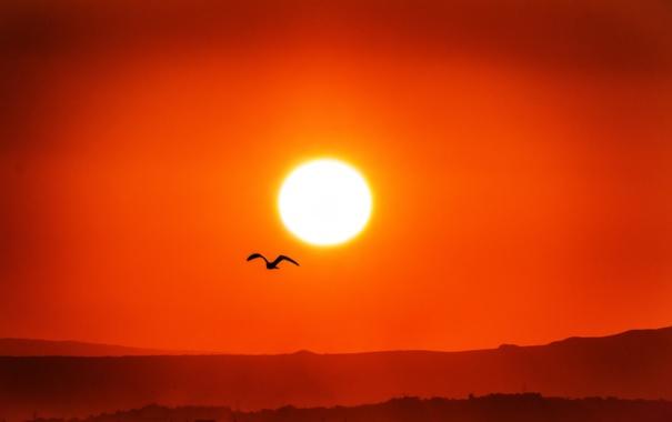 Фото обои небо, солнце, закат, горы, природа, птица, силуэт