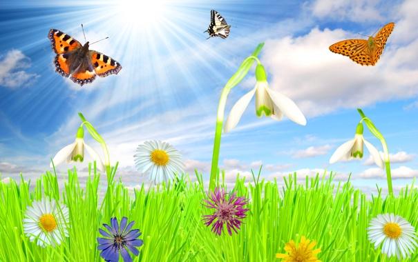 Фото обои лето, небо, трава, солнце, облака, лучи, цветы